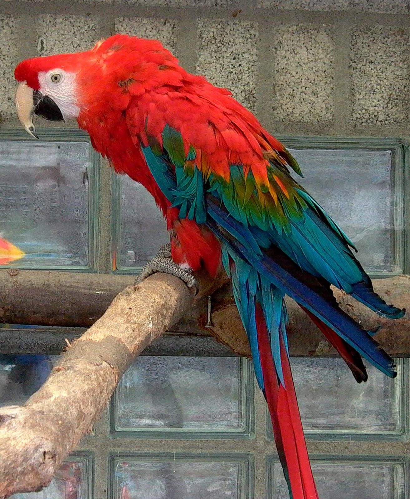 how to cut parrot wings