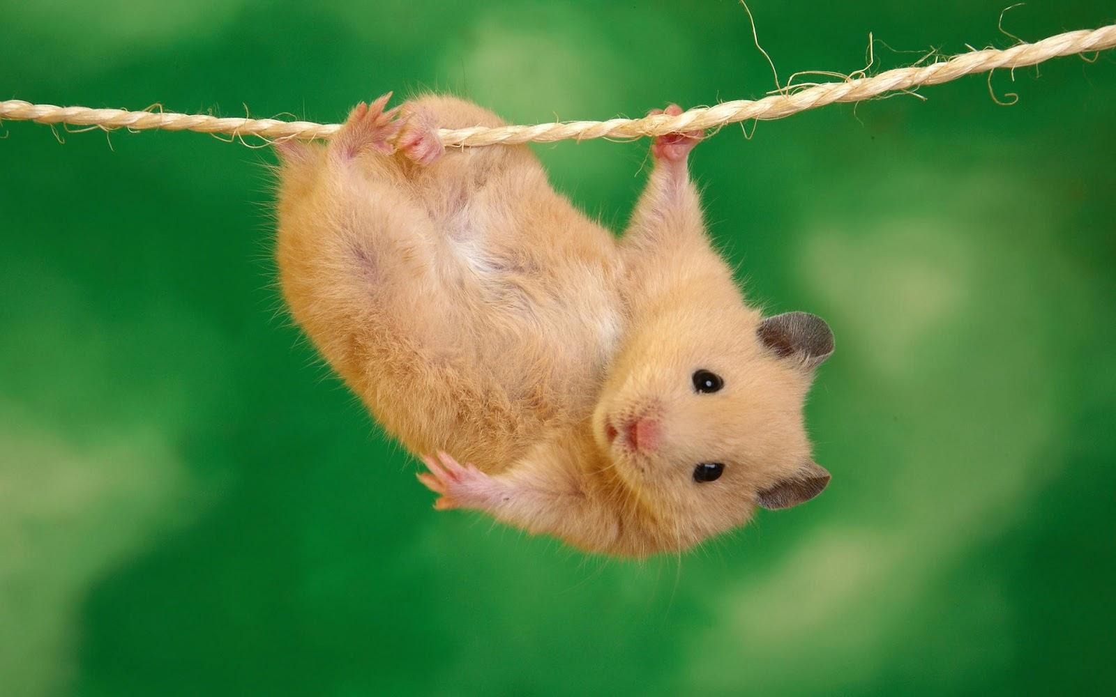 http://3.bp.blogspot.com/-2xGwjia9tZo/UaGi9WKOSTI/AAAAAAAAFJ8/ym8GYpoNzEk/s1600/mouse.jpg