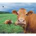 3 cara memotong atau crop gambar di corelDraw