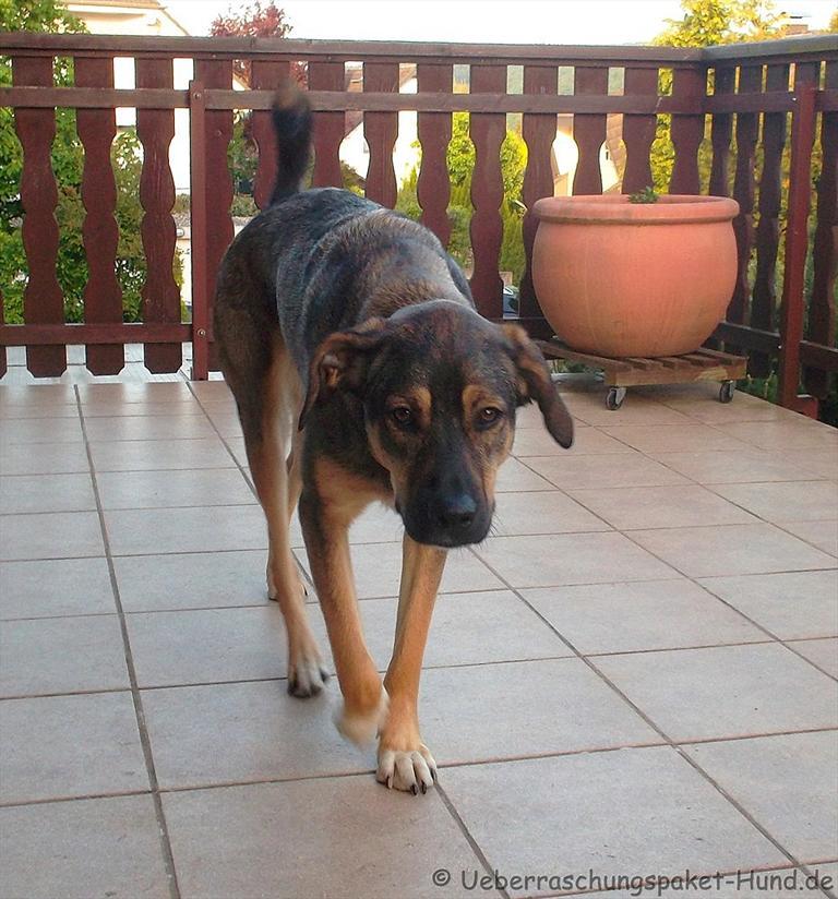berraschungspaket hund ein hundeblog der zeigt wie unterschiedlich hunde doch sind bei uns. Black Bedroom Furniture Sets. Home Design Ideas