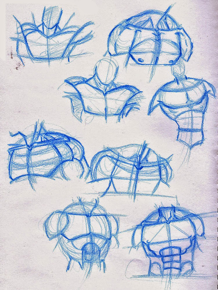 Hamo\'s Art Blog: Torso Anatomy Studies