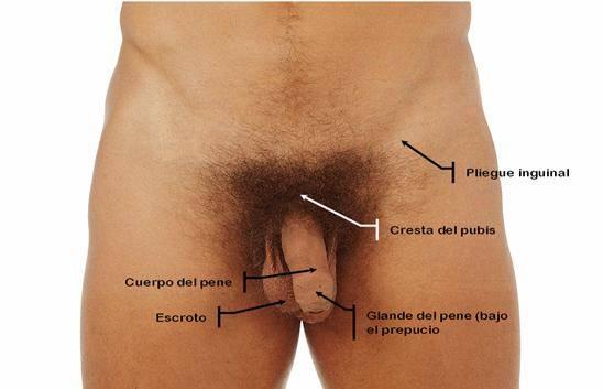 La grasa de lubricación el hongo en los pies
