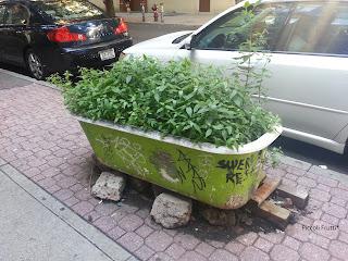 Vasi improvvisati anche nellarredo urbano: le vasche riciclate di ...