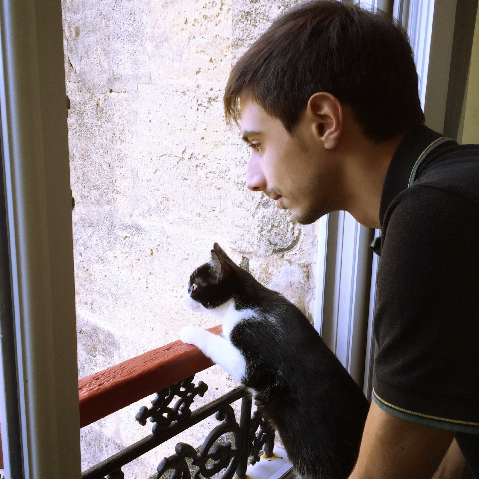 chat qui regarde la fenétre