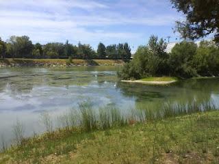 algas en el Ebro Zaragoza