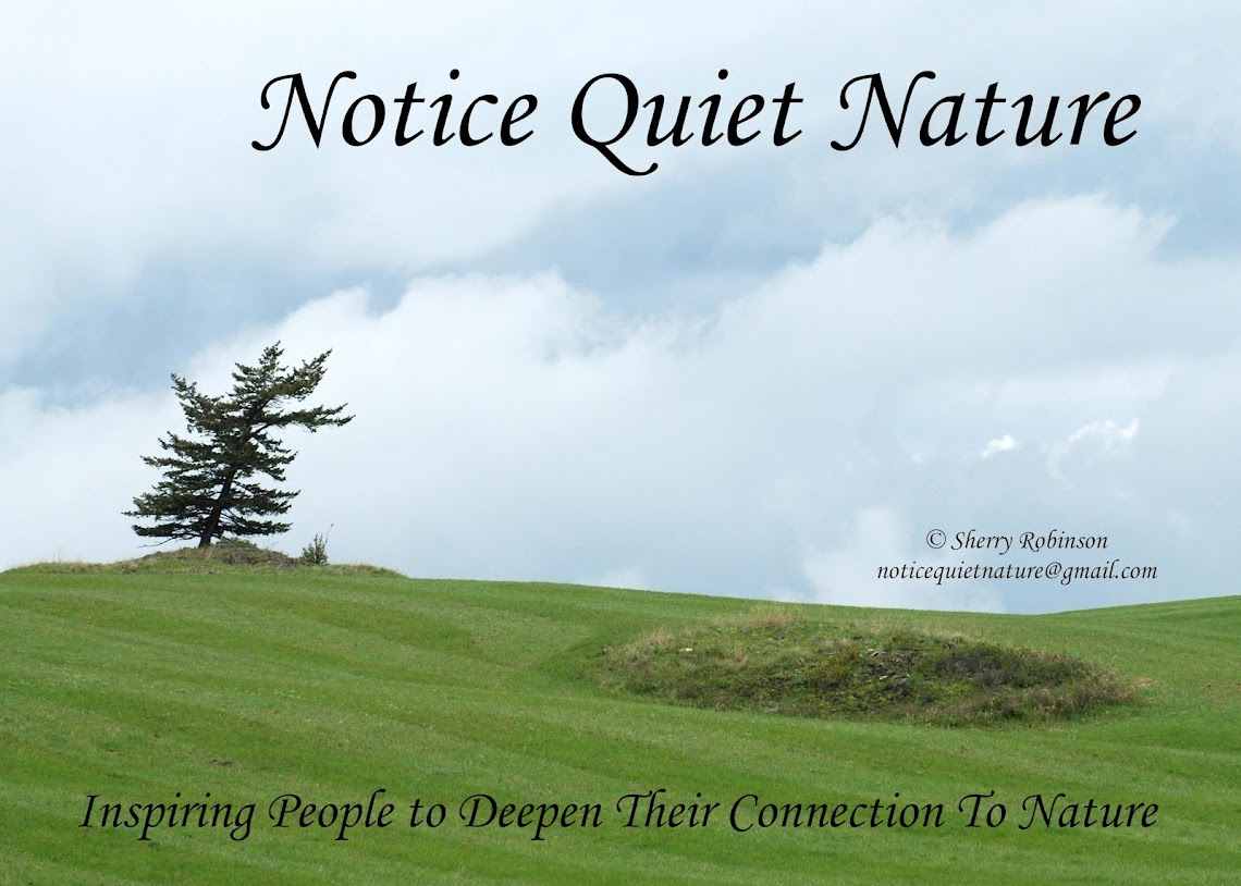 Notice Quiet Nature