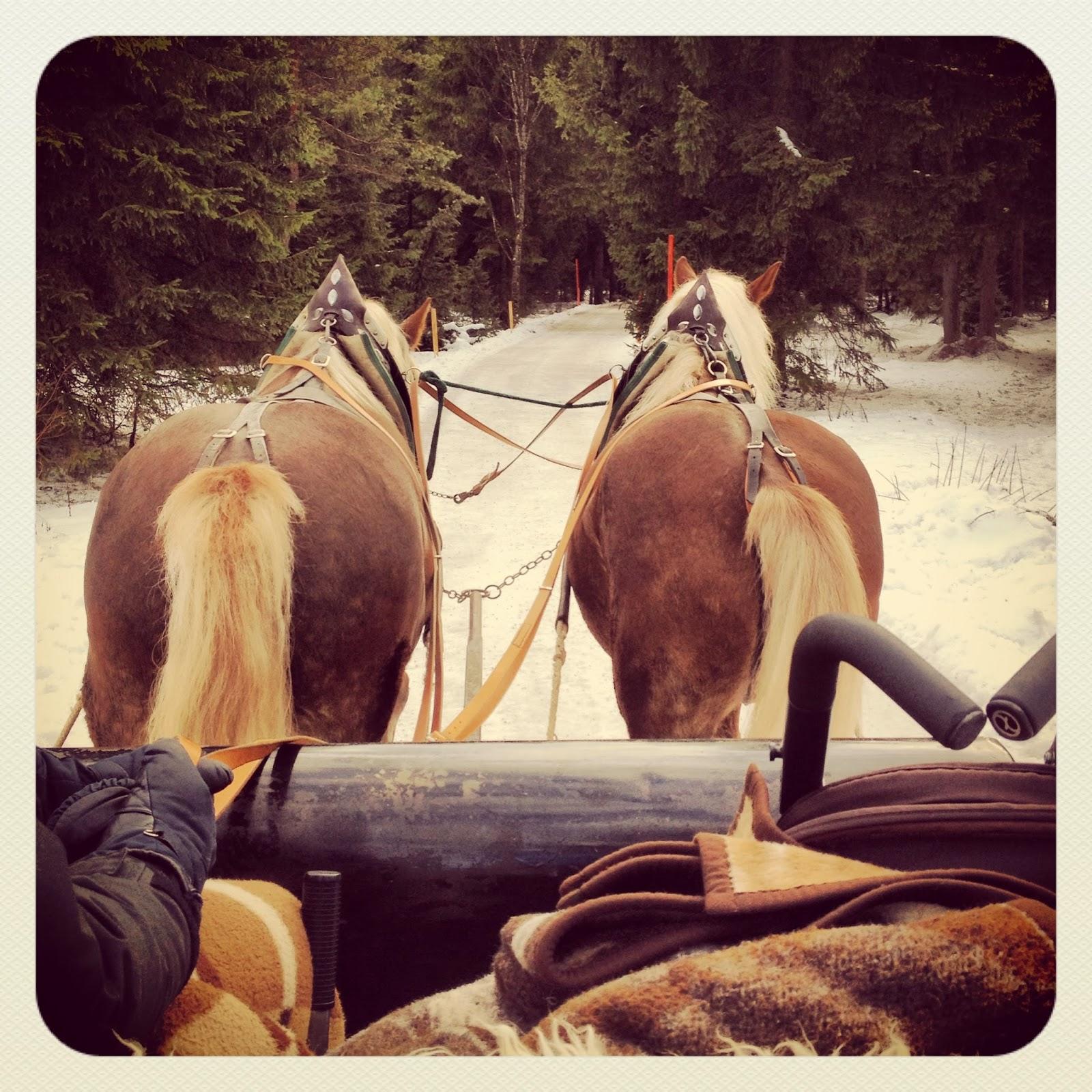 Pferdeschlittenfahrt Tegernsee