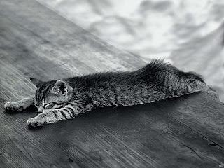 7 Penyakit Kucing yang Perlu Diketahui