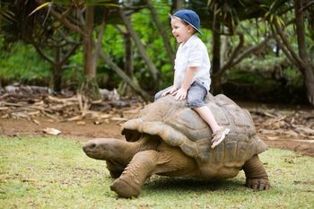 ... turtles,turtles for pets,turtles information,sea turtles facts,facts