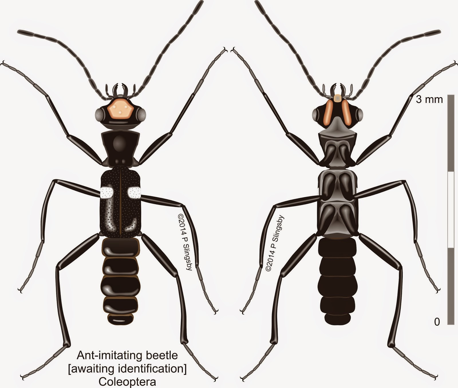 Ants of Southern Africa -