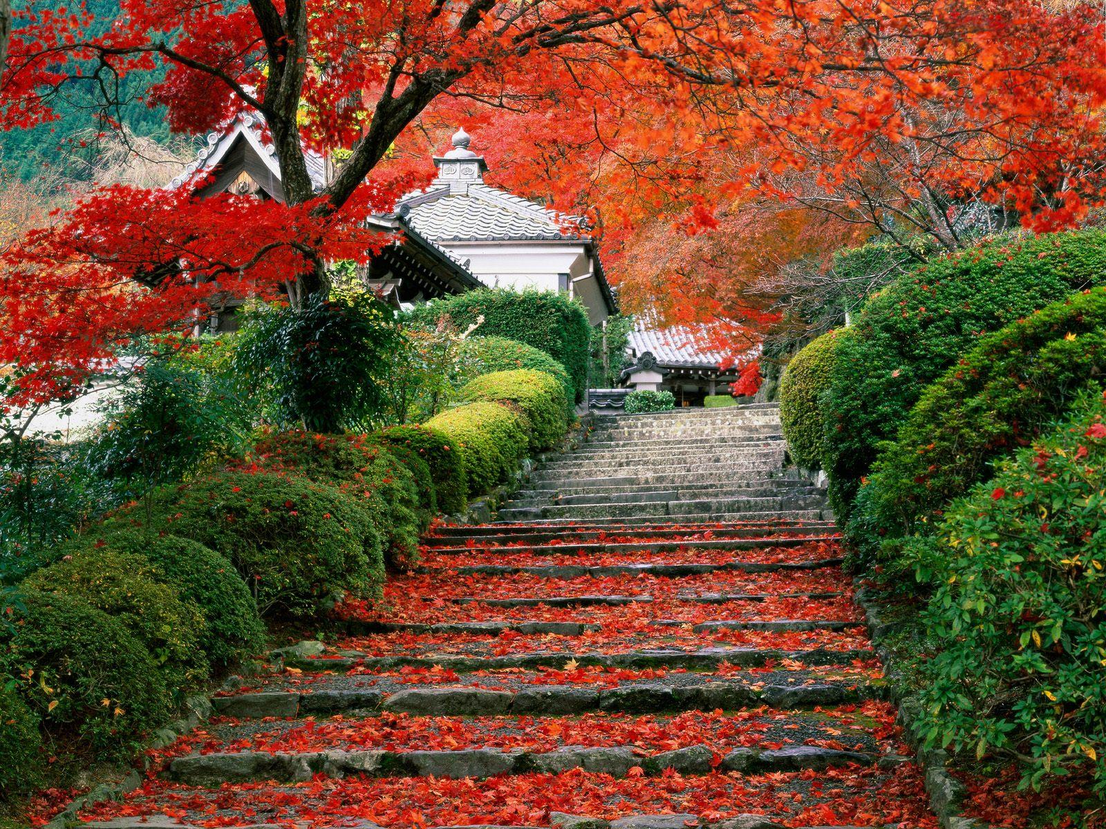 http://3.bp.blogspot.com/-2yw3VWRBAxg/Th3bmbxRxEI/AAAAAAAACNg/Z1ZuZgzd6g4/s1600/Garden+Staircase+Kyoto+Japan.jpg