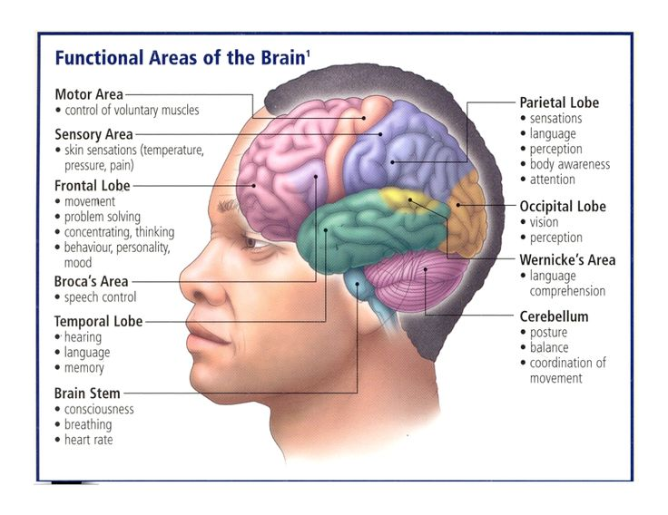 3 main functions of the nervous system