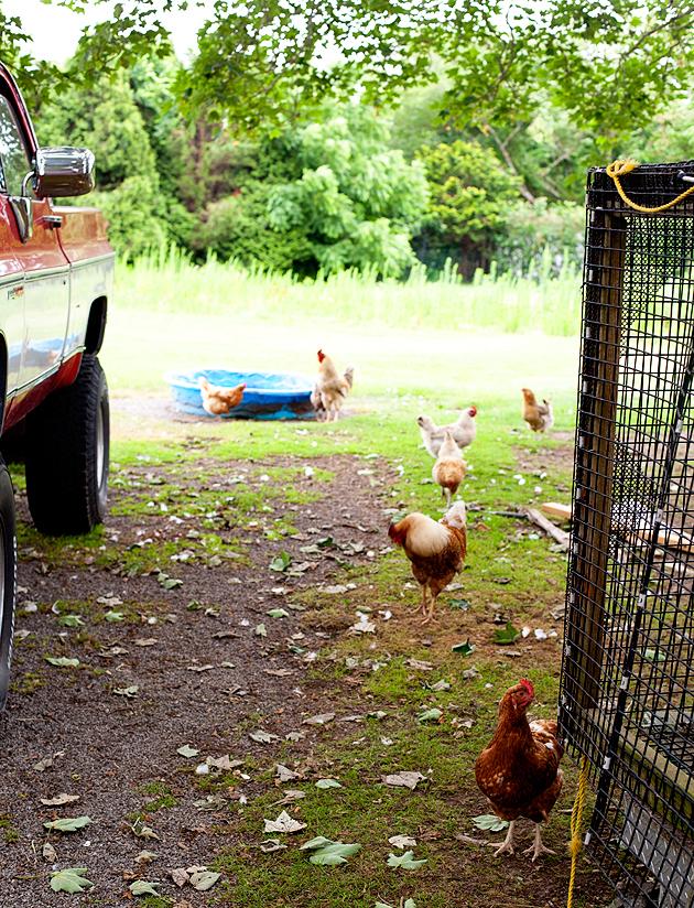 hamptons farmstand