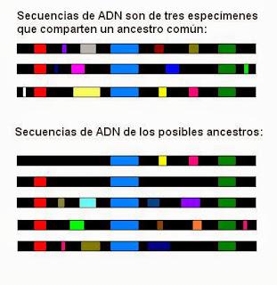 Secuencias de ADN