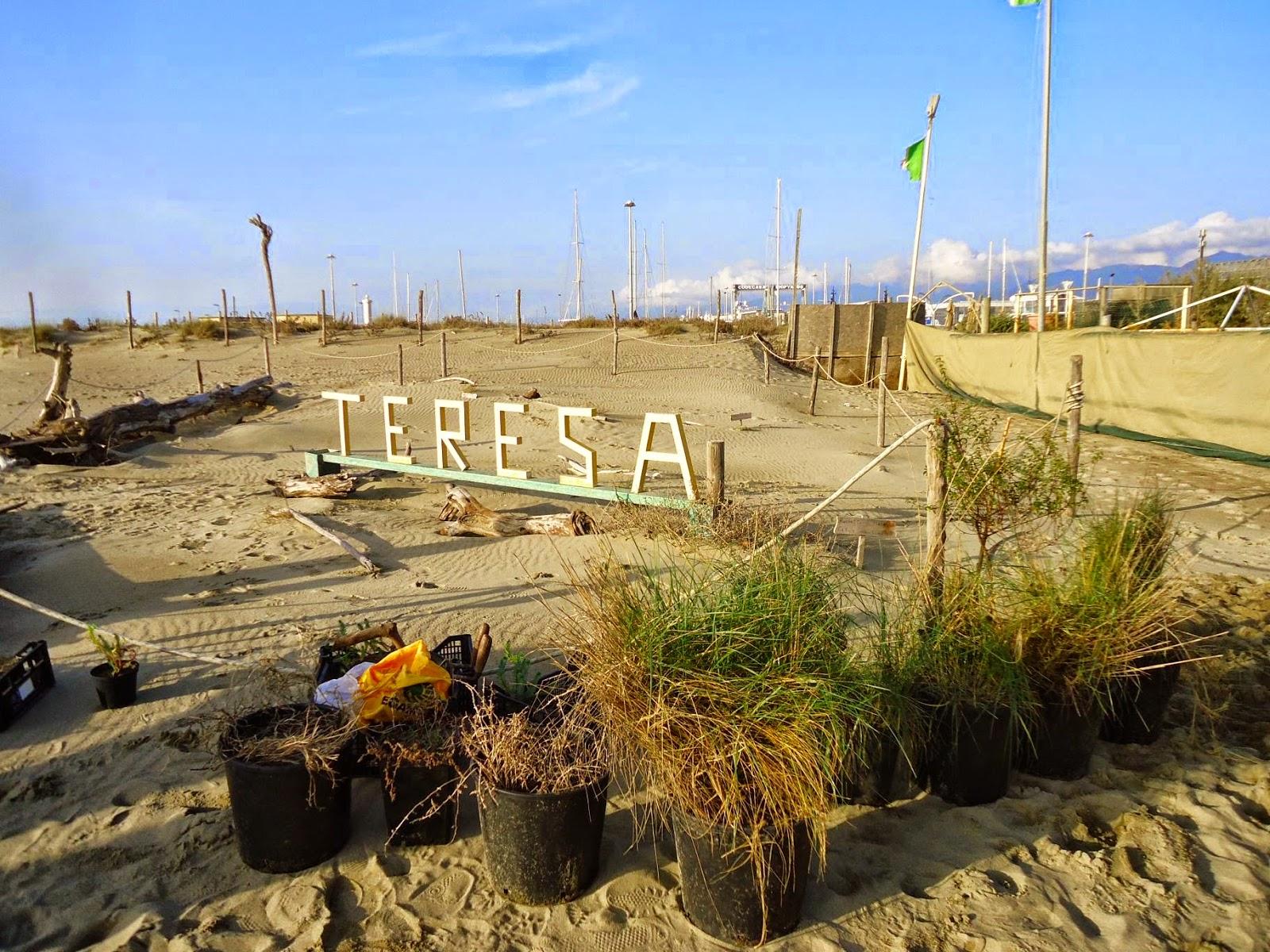 Legambiente versilia bagno teresa avanti tutta nella ricostituzione delle dune - Bagno flora viareggio ...