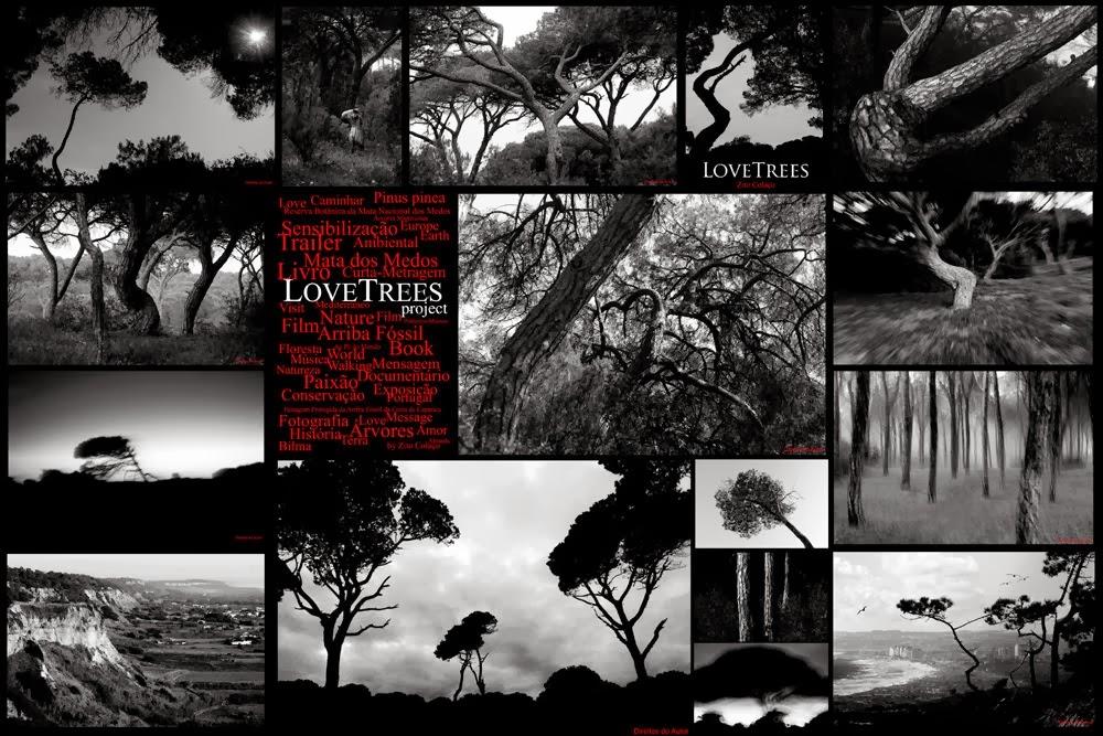 Exposição de Fotografia Love Trees ou Árvores Esculpidas ao Vento