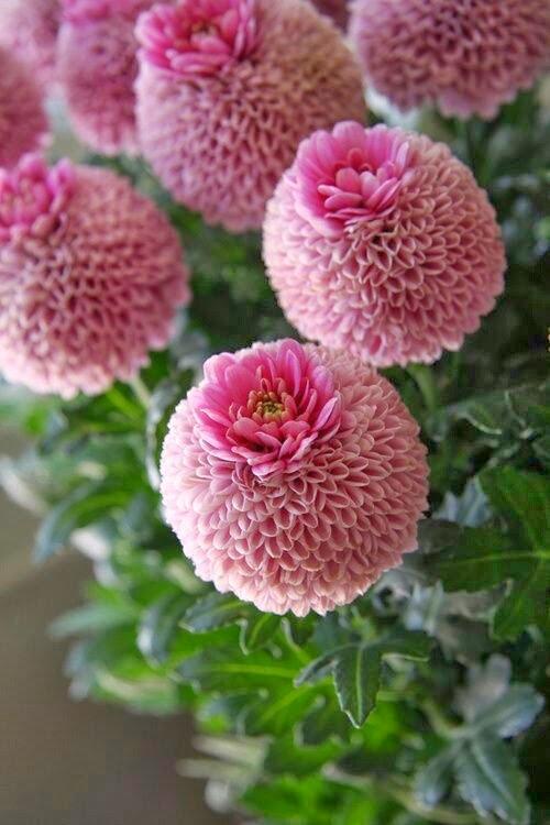 pink/lulu klein