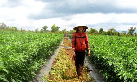 """Gia Lai: Hàng chục cụm công nghiệp bỏ hoang, dân """"mượn"""" đất canh tác"""
