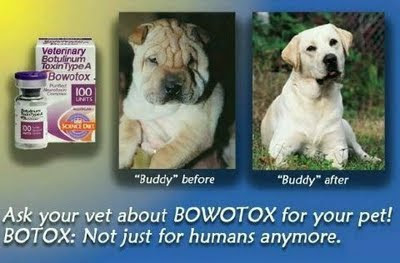 botox injections for pets