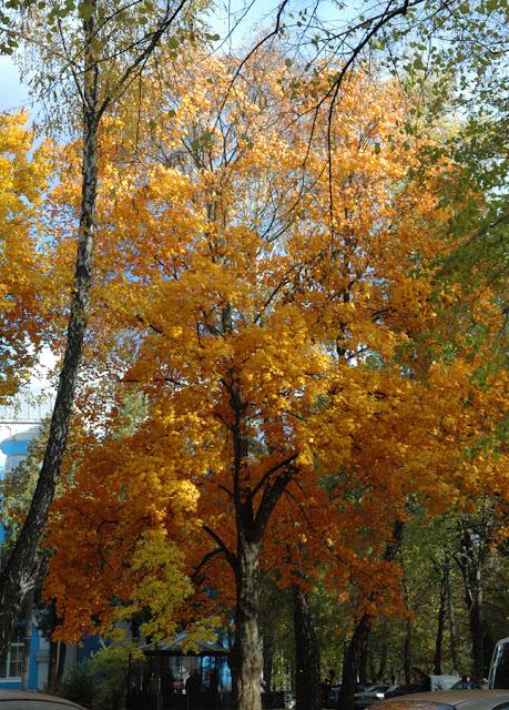 Фото Виталия Бабенко: осеннее дерево