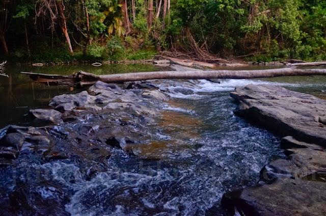 Kembara Malaysia masuk hutan bertemu tapak Harimau di hari kedua