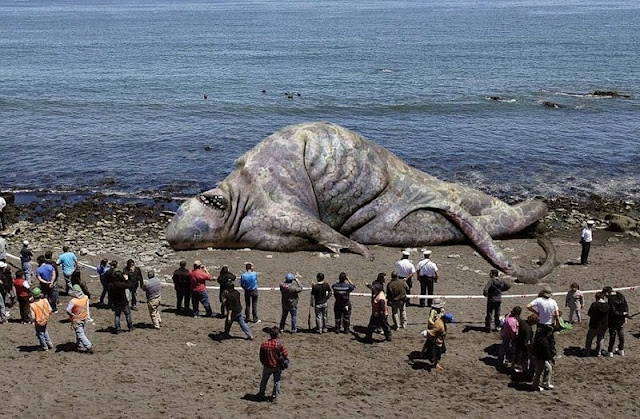 Top 9 Most Bizarre Sea Monster Carcasses Ever Found