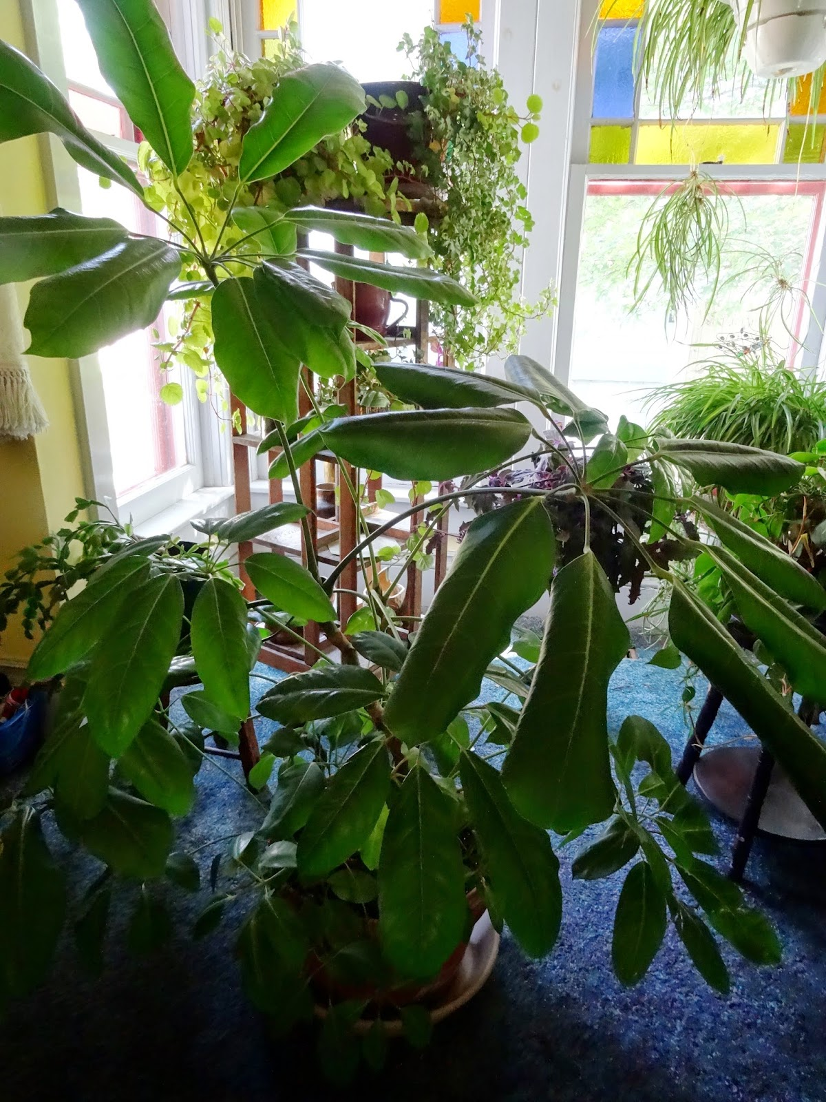There 39 s a dragon in my art room the house plant problem - Plants for every room in your home extra comfort and health ...