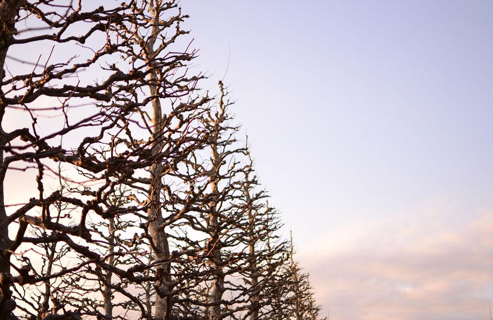 不思議な並木の写真
