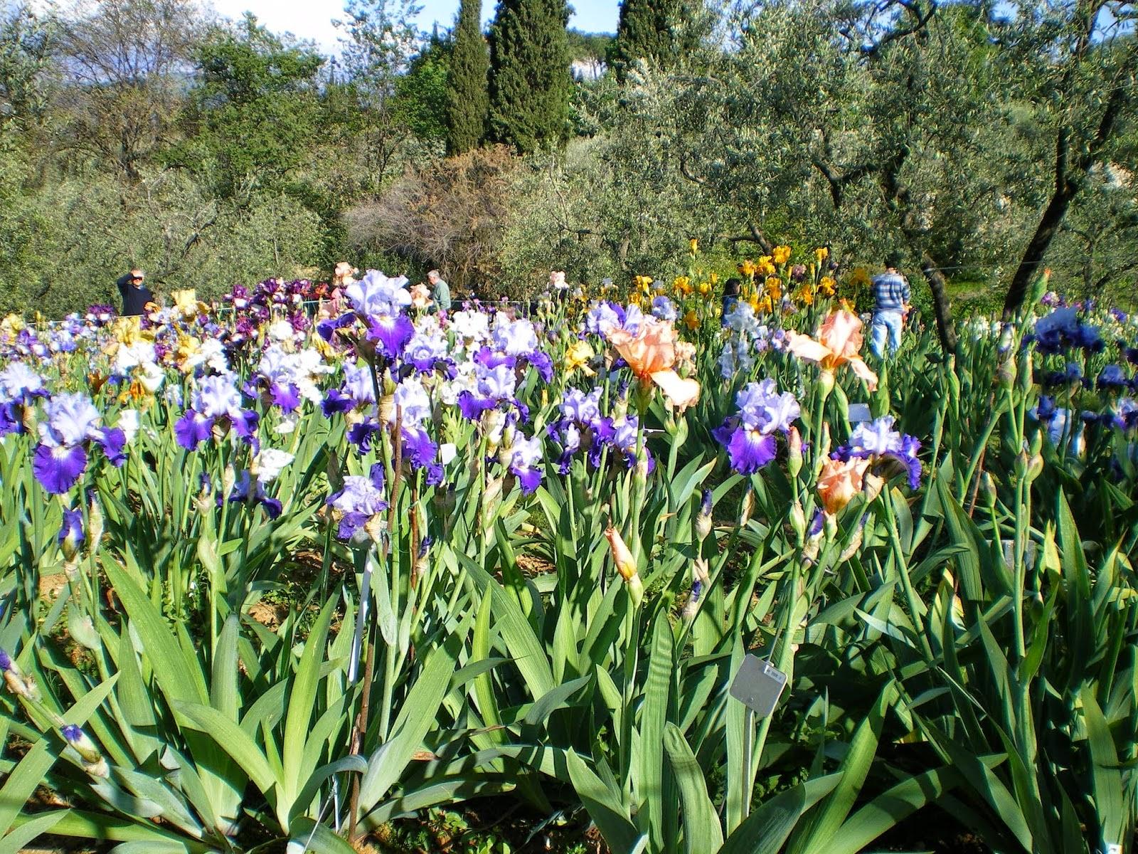 In primavera il giardino dell 39 iris di firenze e 39 una - Giardino dell iris firenze ...
