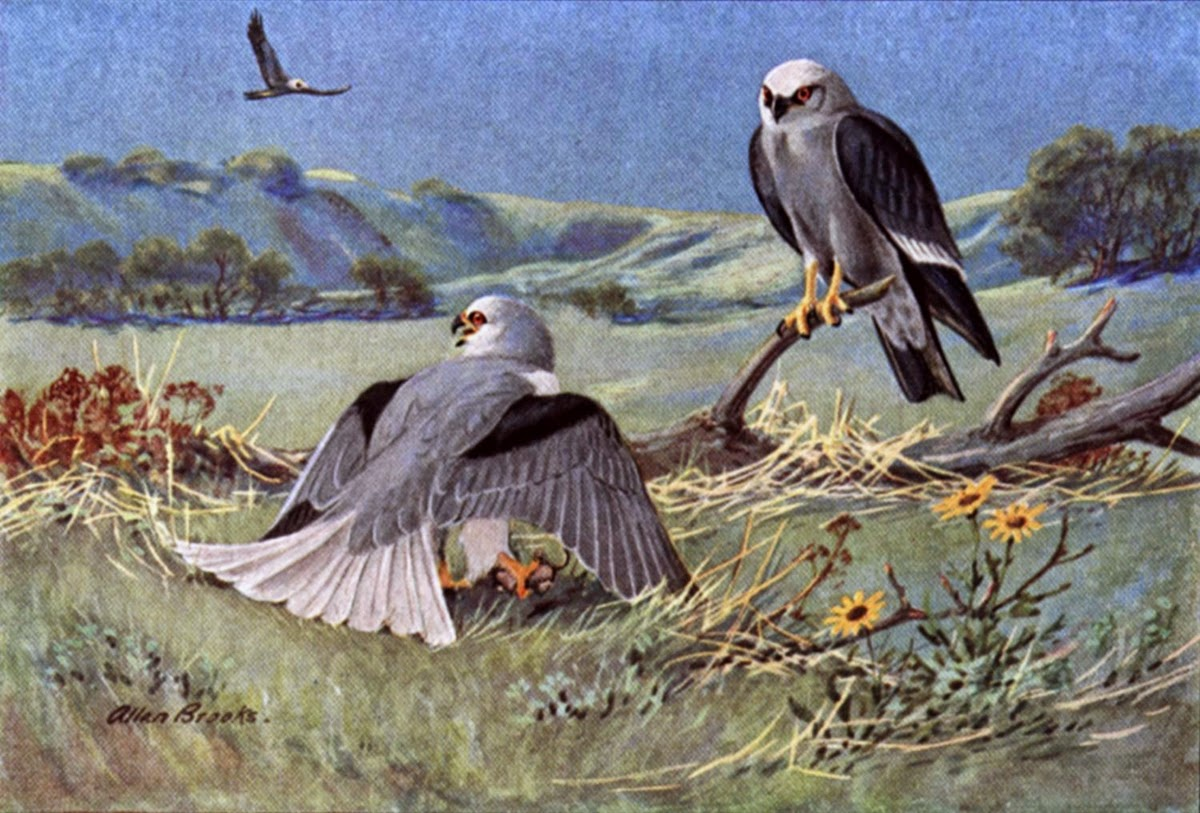 The Eagle And The Kite Kids Stories