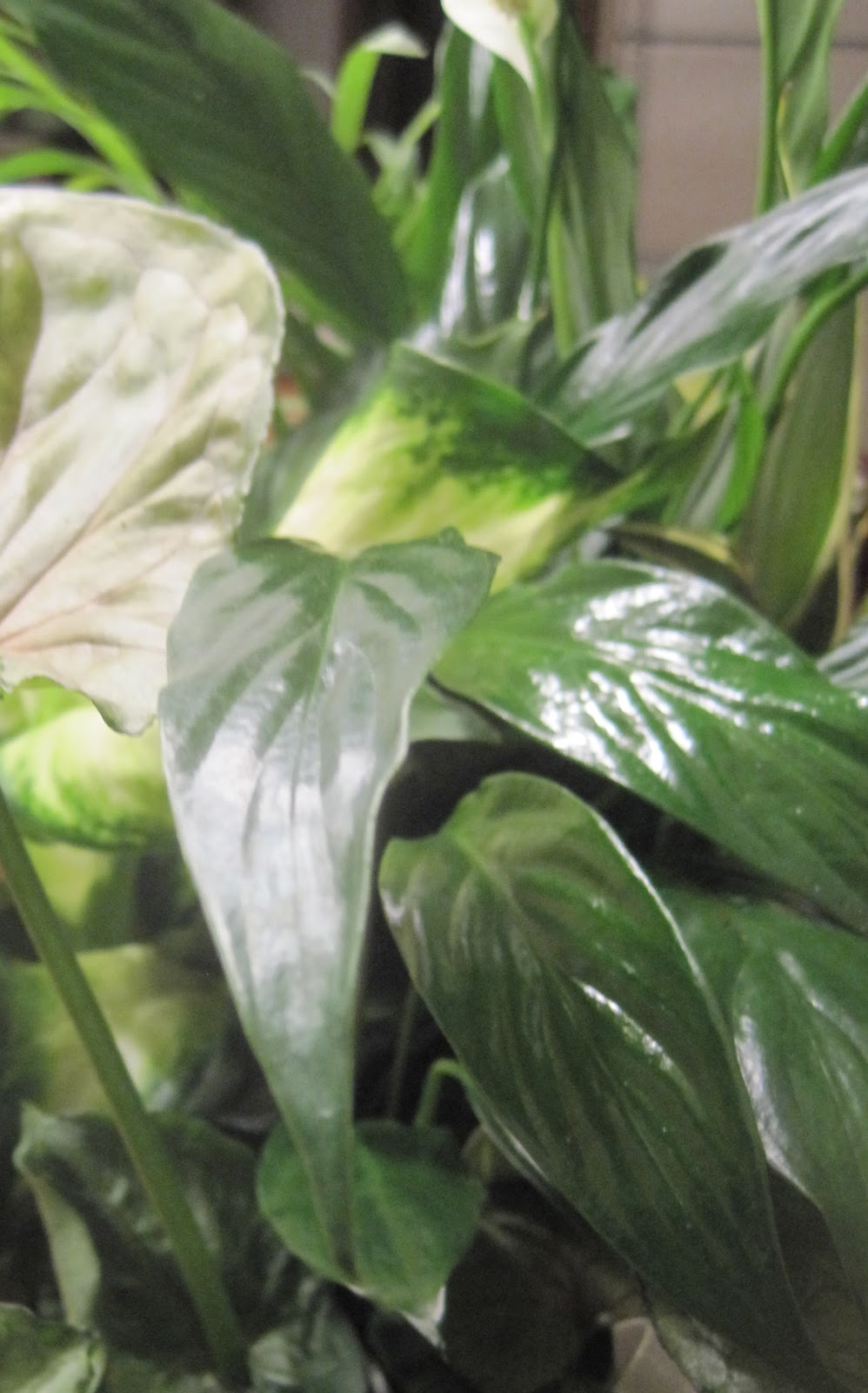 Beauteous 10 Large Leaf Tropical House Plants Decorating