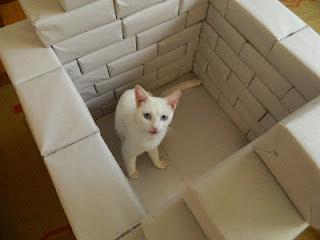 Gata Malu inspeciona construção de casinha para cães e gatos, feita com materiais recicláveis
