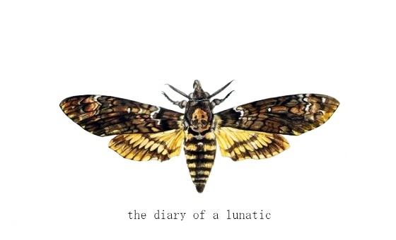 The Diary of a Lunatic