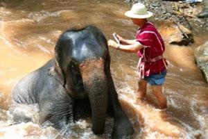 Wildlife rehabilitator salary range