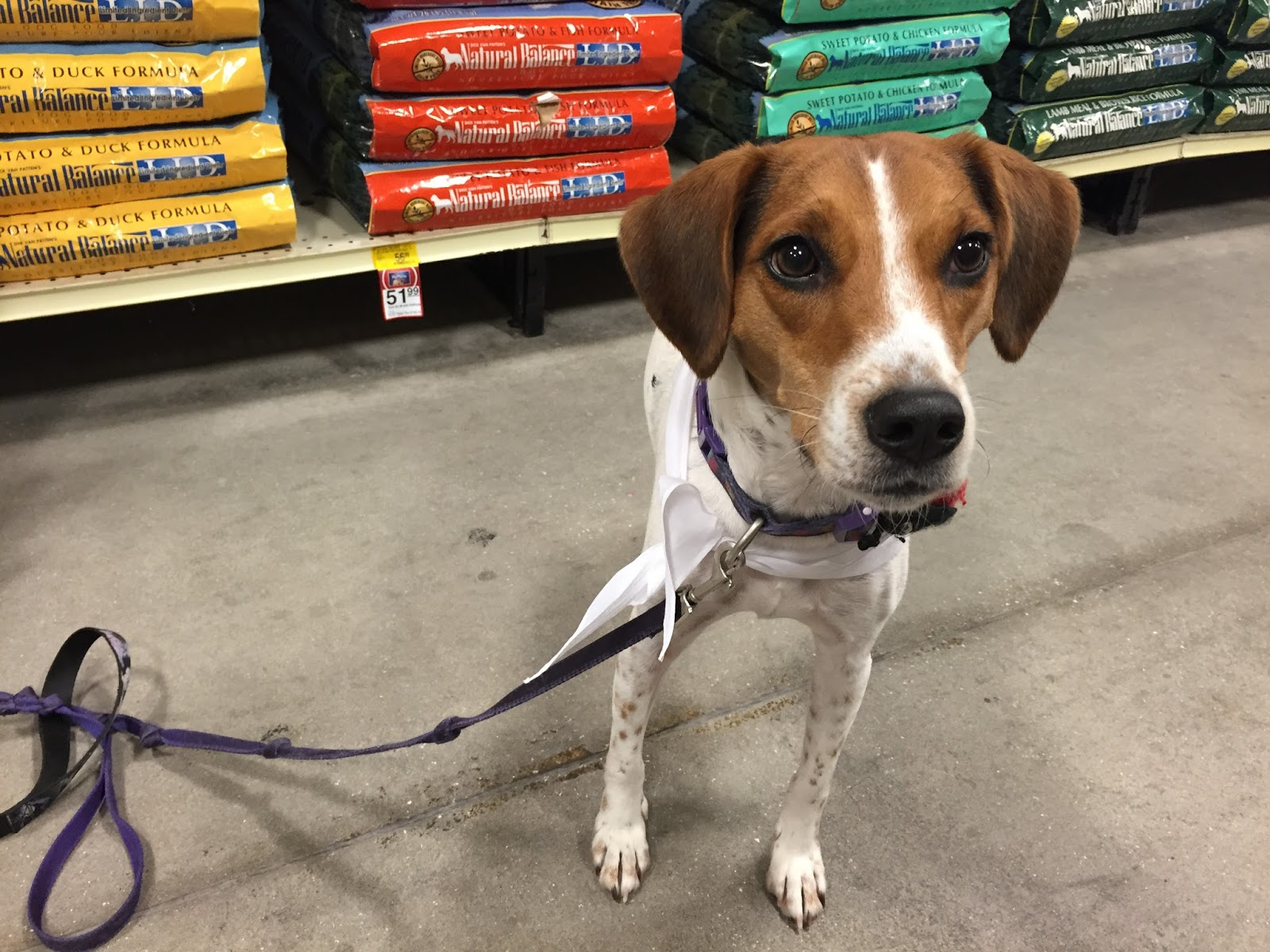 Life With Beagle Limited Ingredient Diets For Allergy