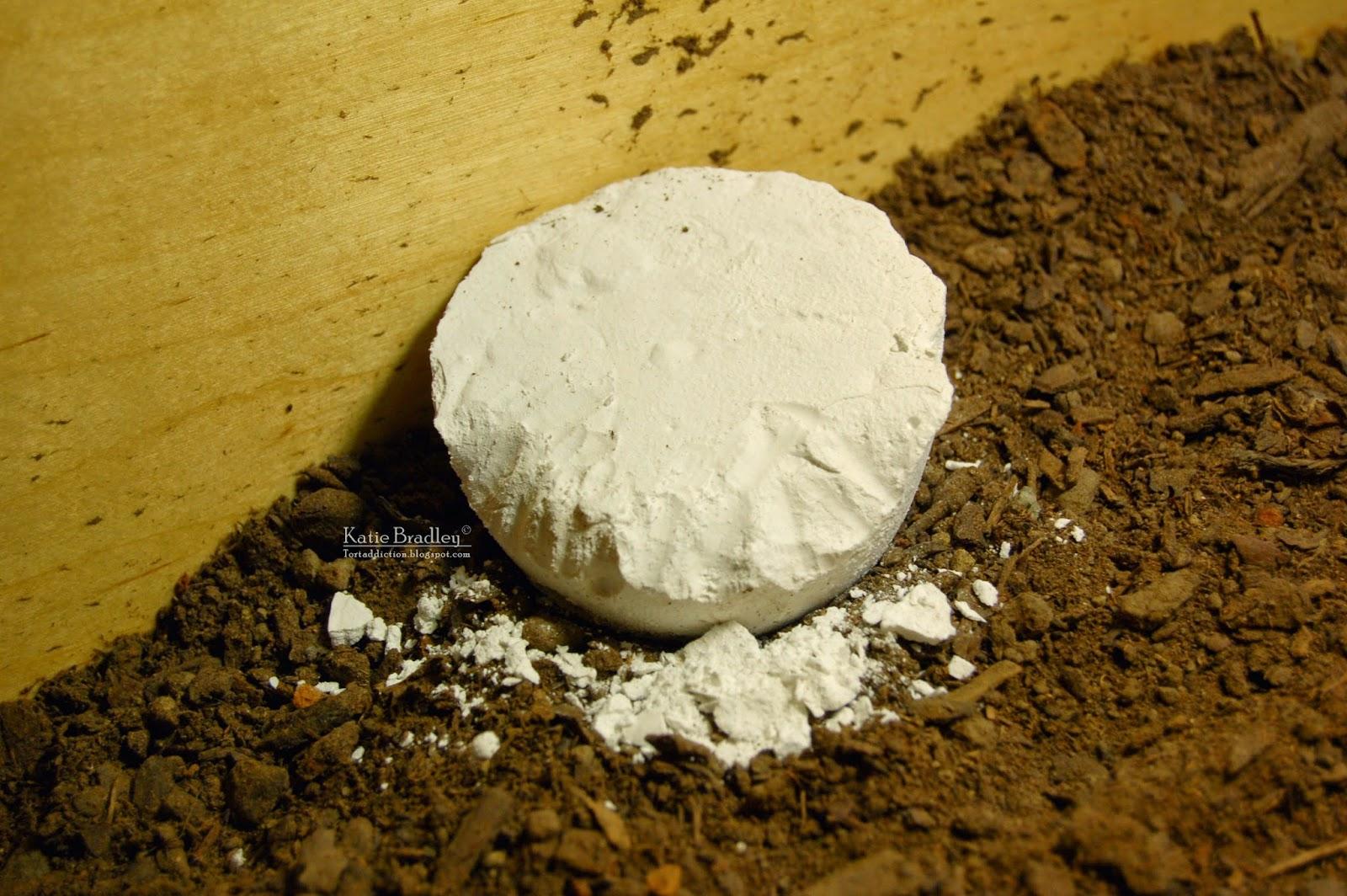 Making A Tortoise Cake