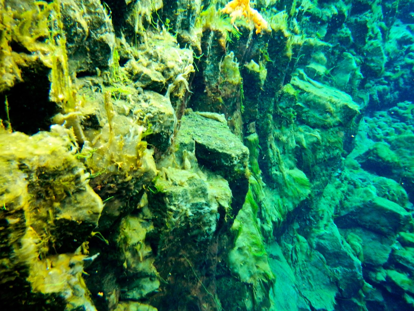 Snorkeling the Silfra Fissure at Pingvellir National Park in Iceland with Arctic Adventures