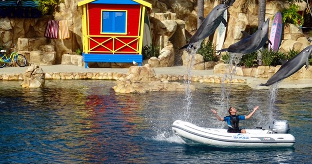 What's New - Sea World 2015