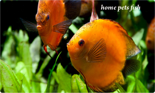 Home pets page home pets how to select the finest kind for Fish and pets unlimited