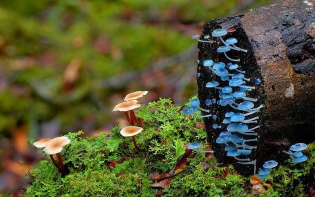 world's strangest mushrooms