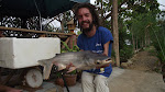 Giant Mekon Catfish