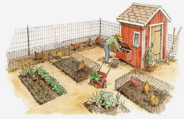 Backyard Farming On An Acre : Backyard Farming