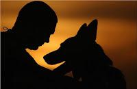 cachorro amigo