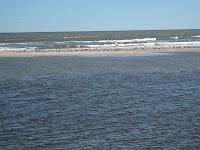 paisaje playa uruguay  gaviotas verano