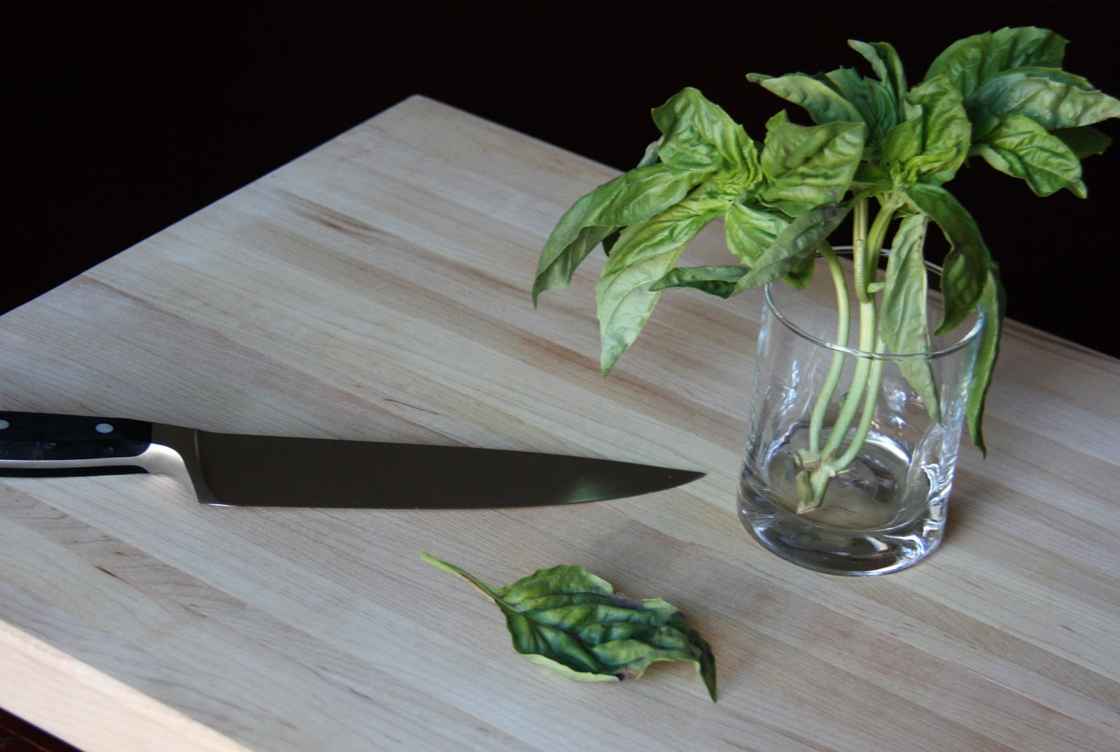 how to cut my basil plant