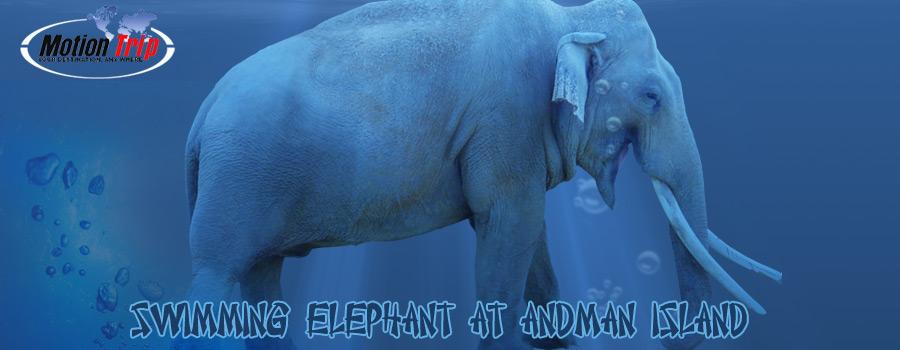 WITH RAJAN ELEPHANT