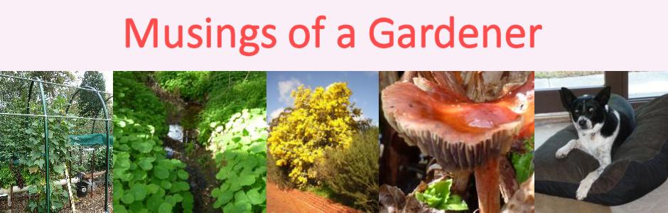 A Gardener's Musings