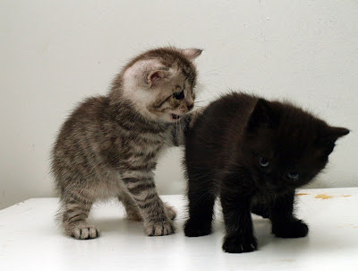 Dos hermosos gatitos - Two cute little kittens