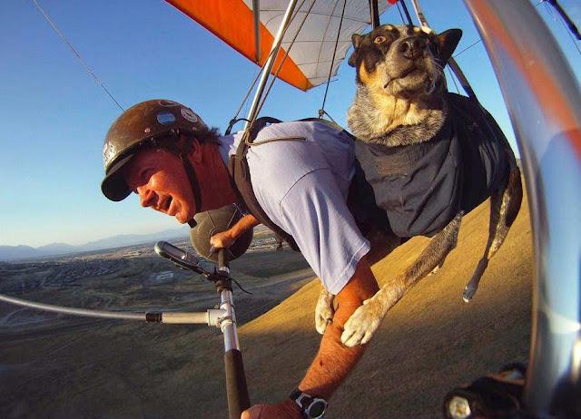 El perro volador que curó a su dueño la ansiedad