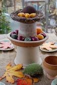 Min trädgårdsblogg! My garden blog!